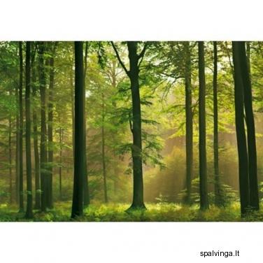 Fototapetai AUTUMN FOREST
