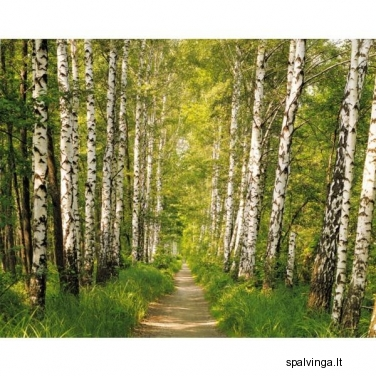 Fototapetai BIRCH PATCH SD301 254 x 368 cm VENA