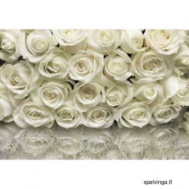 Fototapetai ROSES 254 x 368 cm VENA