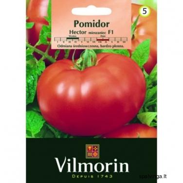 Pomidorai HECTOR VILMORIN